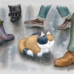 Die Schmatzekatze im Regen